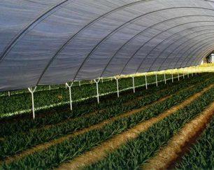 تولید کننده نایلون عریض کشاورزی